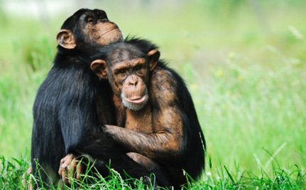 Charla Nash Speaks Out to End the Primates as Pets Industry