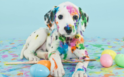 Daily Cute: Puppies Show Off Their Artistic Side