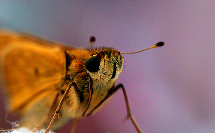 5 Amazing Facts that Will Make You Love Moths