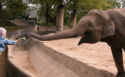 144 Pills a Day: This is the Life of a Captive Zoo Elephant Named Mama