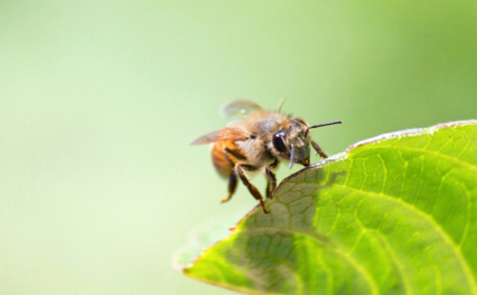 4 States Just Got a Little Bit Safer for Bees