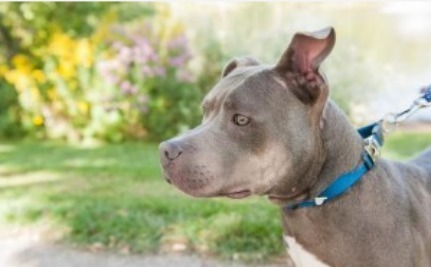Playing Catch Up: What Happened to These Animals After Their Rescues