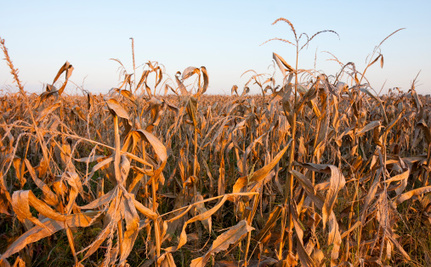 How Will Man-Made Climate Change Affect Our Food Supply?