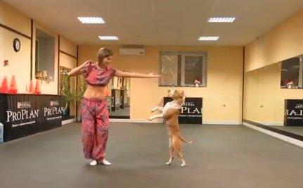 Daily Cute: Dog and His Human Do a Dance Number