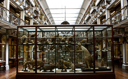 Is it Ethical for Museums to Collect Dead Animals?