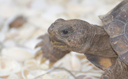 The Fury of Social Media Brings Tortoise Abuse Teens to Justice