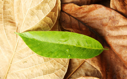 How Artificial Leaves Could Help Us Breathe Easier on Earth and in Space