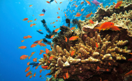 The Great Barrier Reef is Sick and Now Faces a Possibly Fatal Blow
