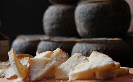 What Microbes are In Your Cheese?