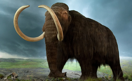 Should We Resurrect Extinct Animals?