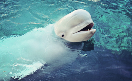 Vancouver Aquarium Will Stop Breeding Whales and Dolphins