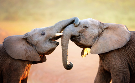 If We Really Want to Save Elephants, We Need to Shut Down Every Ivory Market