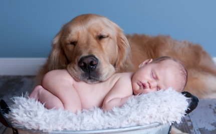 Daily Cute Baby Cuddles With Dog Care2 Causes