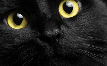 Are People Rejecting Black Cats Because They Take Bad Selfies?