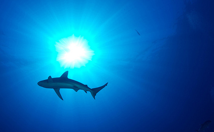 Shark Week Has Fallen Victim to Sensationalism, and That's Not OK