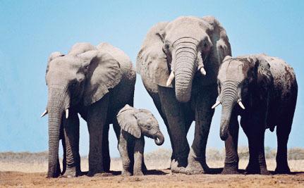 Victory! New York Bans Ivory on World Elephant Day