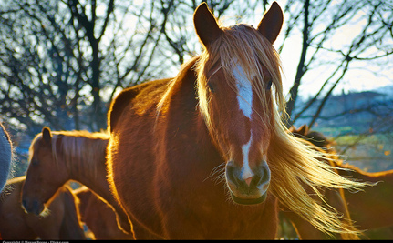 Horse Communication Might Have Little to Do With Neighing