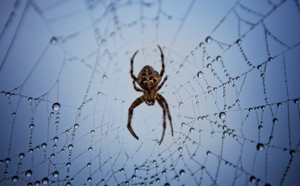 Why Our Future Depends on Spider Conservation