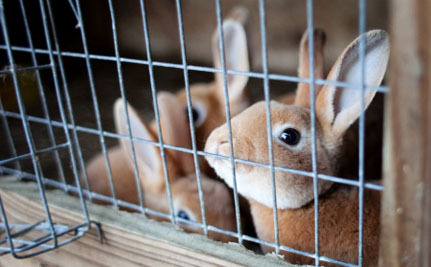 "Here's What's Wrong With Whole Foods' Plan to Sell ""Humane"" Rabbit Meat"