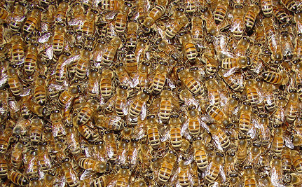 Could Bees Help Us Win the Fight Against Cancer?