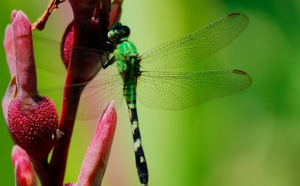 The Truly Simple Way You Can Save Dragonflies From Extinction