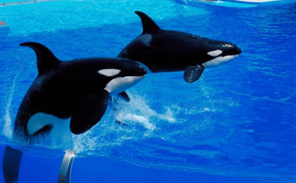 "SeaWorld Suffers a Second Huge Setback as ""Blackfish"" Backlash Continues"