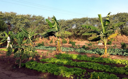 "African Farmers Are Creating Forest Gardens and ""Planting it Forward"""