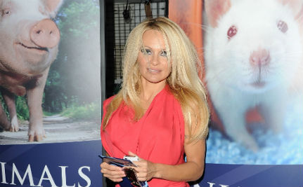 Rejecting the ALS Challenge: Pamela Anderson's Animal Rights Argument