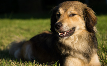 10 Easy Ways to Make Your Dog's Life More Holistic