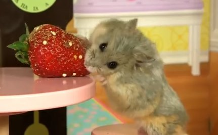 Daily Cute: Tiny Hamster Plays in a Tiny Mansion