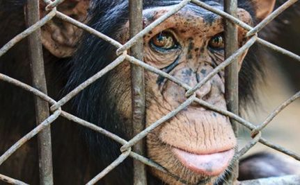 4 Reasons Why Selling Primates as Pets Should Be Illegal