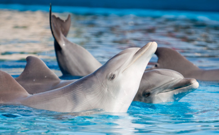 Another Aquarium Says No to Dolphin Shows