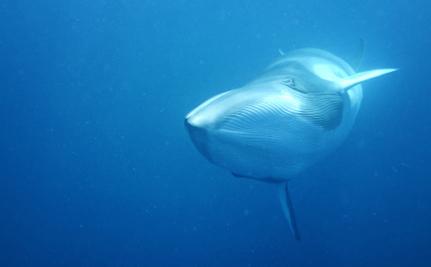 Japan Announces Plans to Start Whaling, Despite International Court Ruling