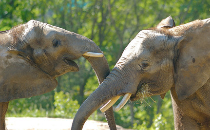 Is This What We Should Do With Ivory Confiscated From Elephant Poachers?