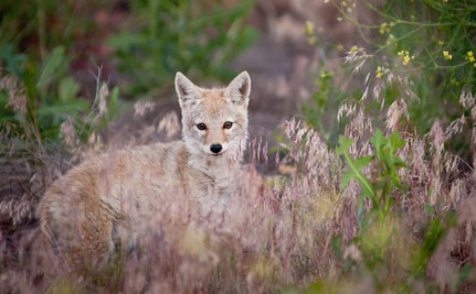 California bans wildlife killing contests