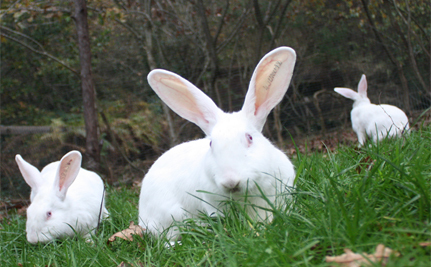 Watch Rabbits Rescued From Laboratory Take First Hop of Freedom