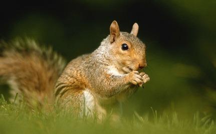 Daily Cute Baby Squirr...