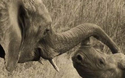 U.S. Veterans Join Fight to End Wildlife Poaching in Africa