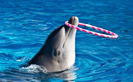 Victory! World's Top Zoo Association Kicks Japan Out Over Cruel Dolphin Drives