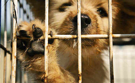 New Documentary Exposes the Politics Behind Puppy Mills