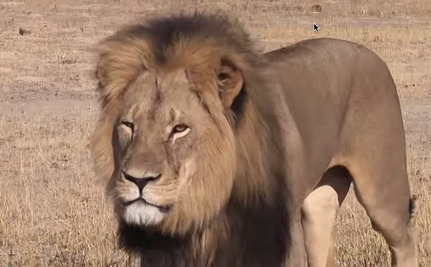 Demand Justice for Cecil the Lion