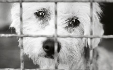 Victory! Puppy Mill Ban in Phoenix is Here to Stay