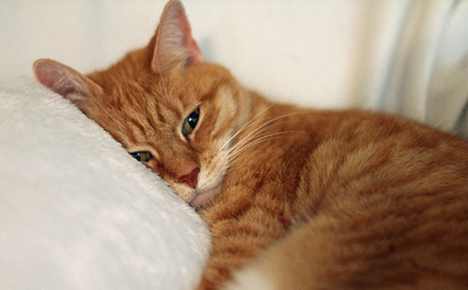 Is Your Cat in Pain and Hiding it From You?
