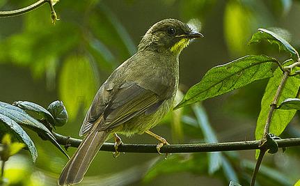 Ghana's Illegal Logging is Destroying Wild Bird Populations