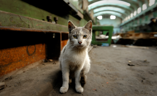 Is Abandoning a Pet a Crime?