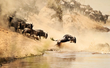Now We Can Watch Africa's Epic Wildlife Migration Live From Anywhere