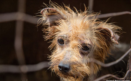 Over 140 Dogs Rescued From Deplorable Conditions