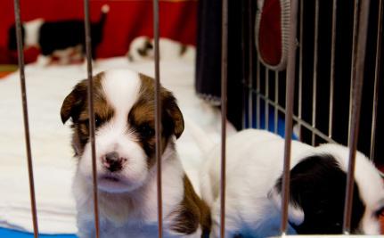 Is Buying a Puppy Always a Bad Idea?