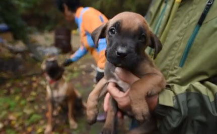 Rescuers Joyously Demolish Dog Meat Farm in South Korea