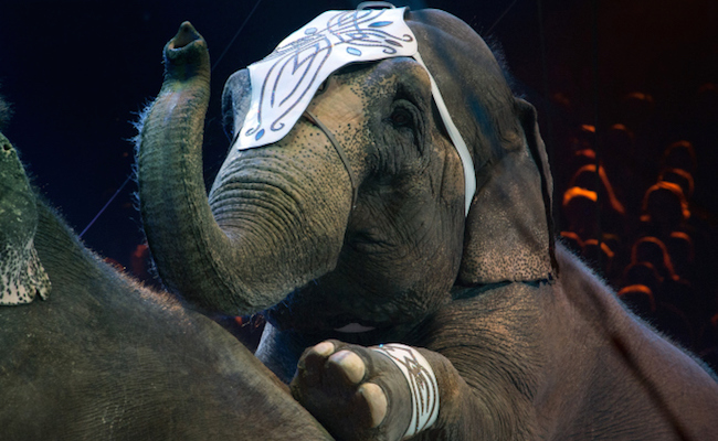 Success! Ringling Bros. to End Elephant Acts 18 Months Ahead of Schedule